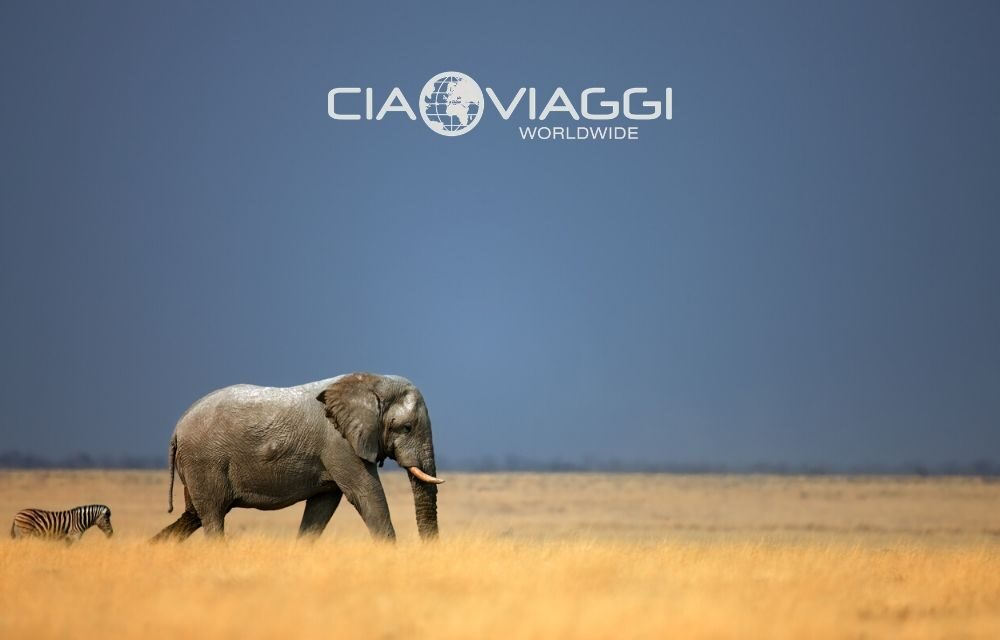 https://www.ciaoviaggi.it/wp-content/uploads/2020/04/namibia-elephant-1000x640.jpg